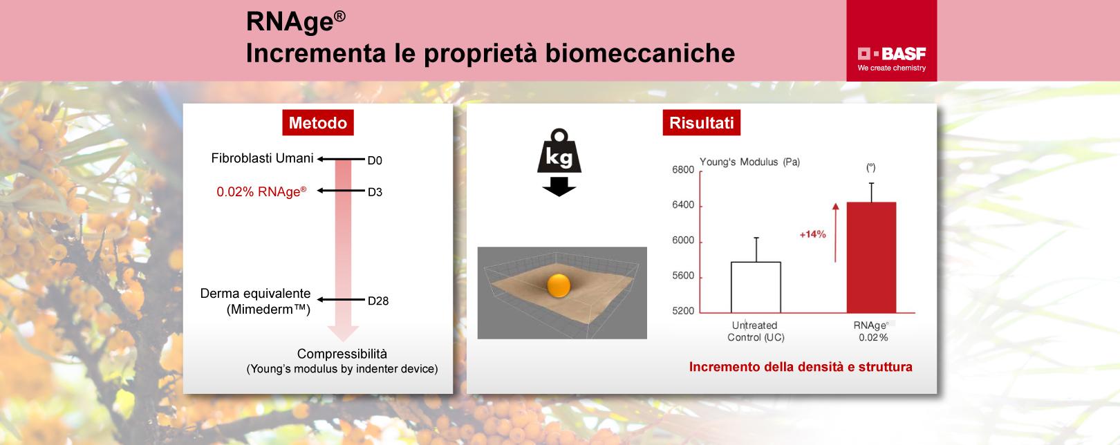 RNAge-incrementa-le-proprieta-biomeccaniche