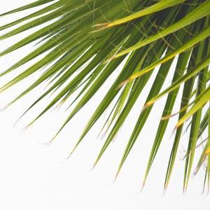 Cetiol RLF emolliente naturale da fonti 100% sostenibili e rinnovabili