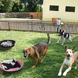 Pet Care: un mercato che apre nuove opportunità di business