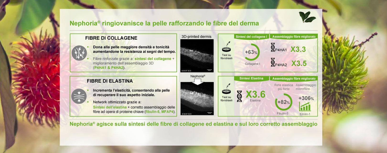 Nephoria ringiovanisce la pelle rafforzando le fibre del derma