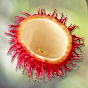 Nephydrat® energia per le cellule estratto dal guscio del Rambutan