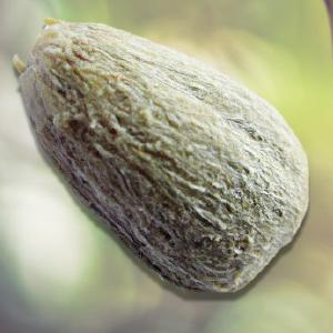 Rambuvital®: protezione attiva per scalpo e capelli estratto dai semi di Rambutan