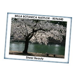 BELLA BOTANICA NATFLOR
