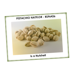 PISTACHIO NATFLOR