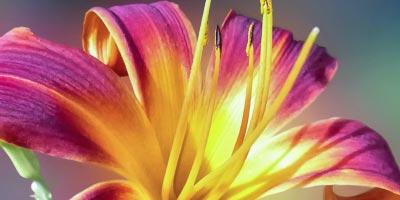 SECRET-FLOWER