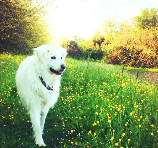 Crema Solare Zone Delicate Pet 2