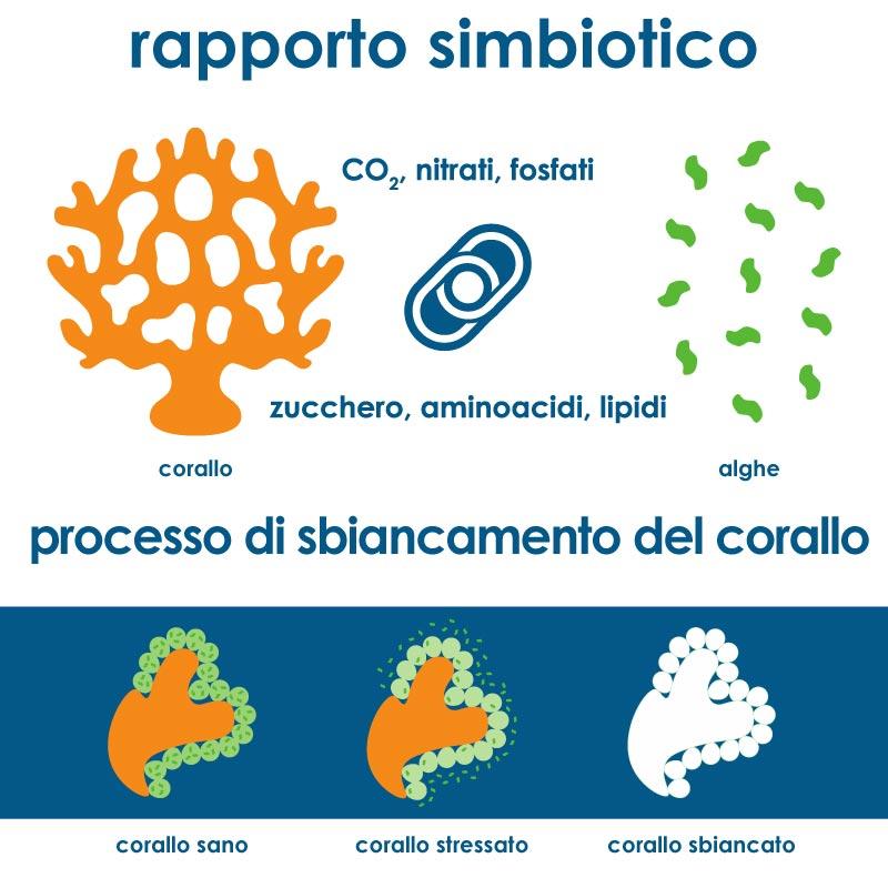 Inquinamento della barriera corallina
