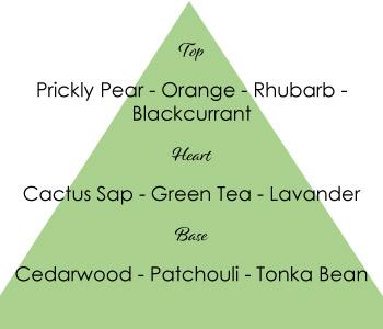 Piramide-OH-CACTUS